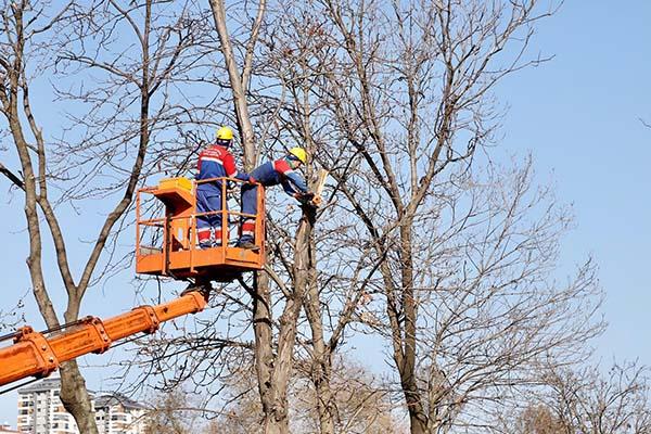 Ekipler ağaçların sağlığı için sahada
