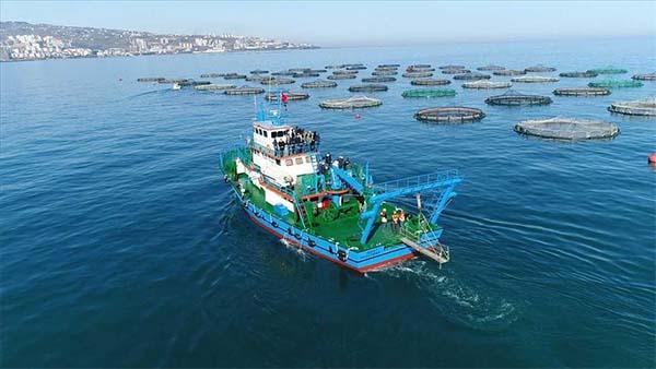 Karadeniz somonu yılın 5 ayında 39 ülkeye ihraç edildi