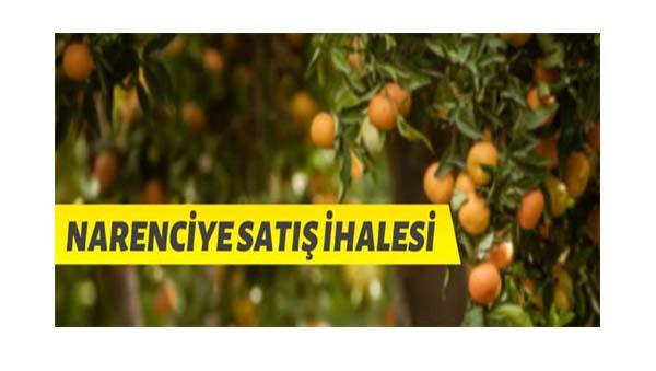 TİGEM Boztepe Tarım İşletmesinden narenciye satışı