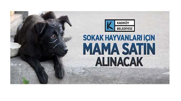 Sokak hayvanları için kedi ve köpek maması alımı yapılacak