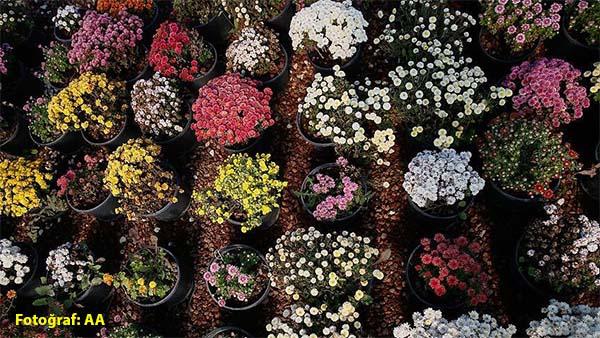 Canlı çiçek satın alınacak