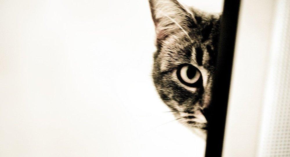 Kedisini beslemesine izin vermeyince, ev sahibini öldürdü