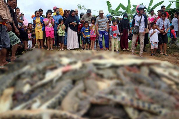 300 timsahı öldürdüler!