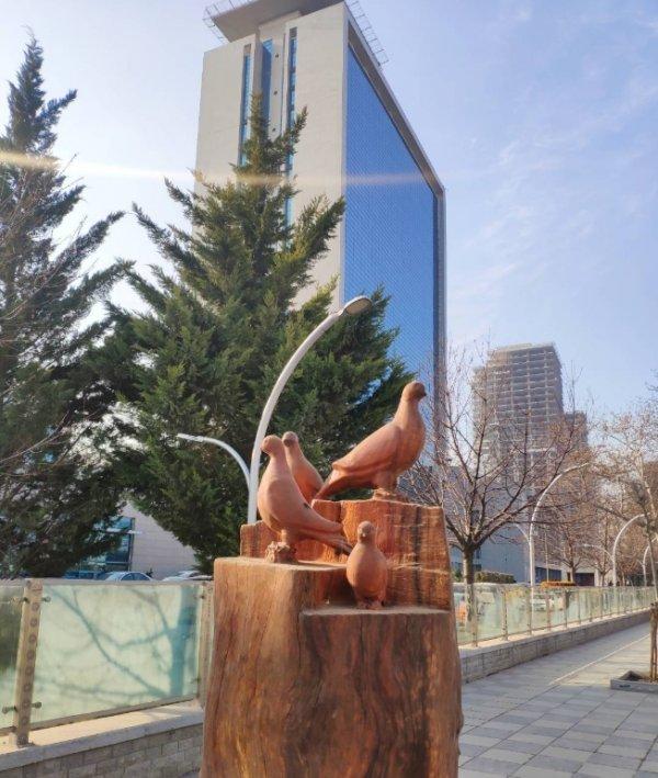 Ankara'da ağaçlar heykel oldu