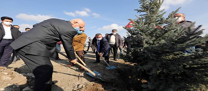 Hurdacılar Sitesi'ne 5 bin Çam Ağacı