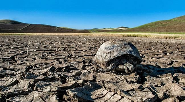 Ekoloji Birliği'nden Paris Anlaşması onaylansın çağrısı