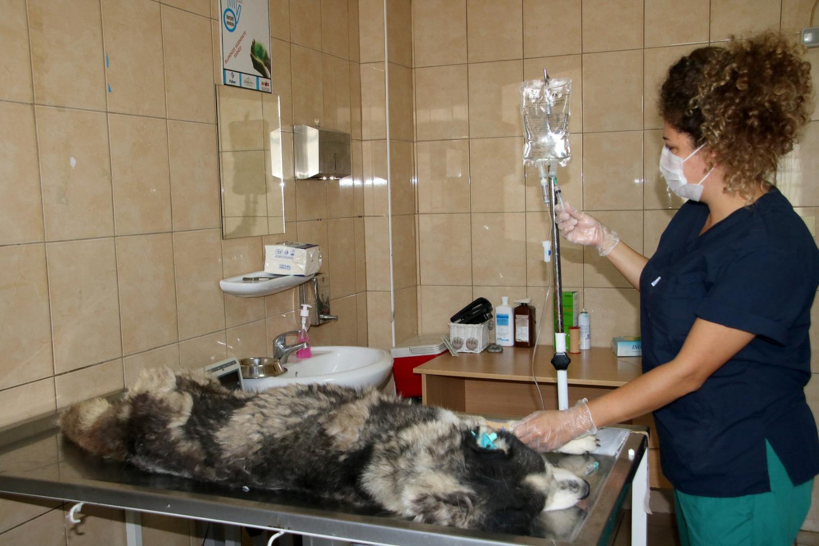 Çankaya Belediyesi 40 bin sokak hayvanını tedavi etti