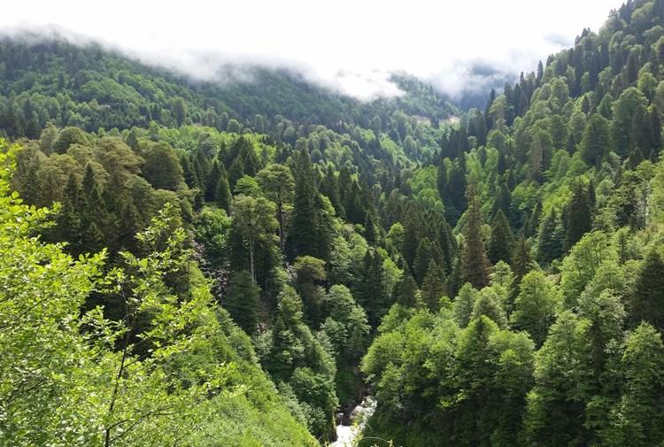 """""""Ormancımızın DNA'sında ormanı korumak var"""""""