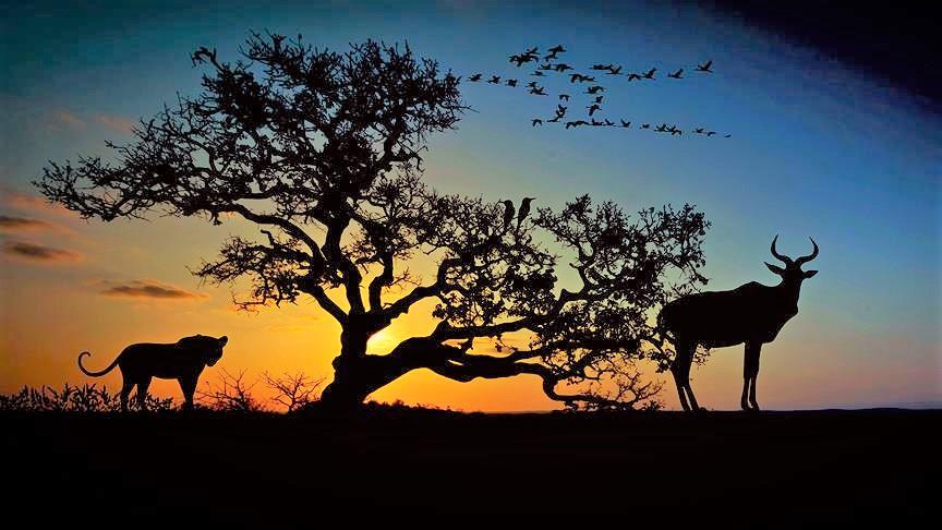 İnsanlık 44 yılda hayvanların yüzde 60'ını yok etti