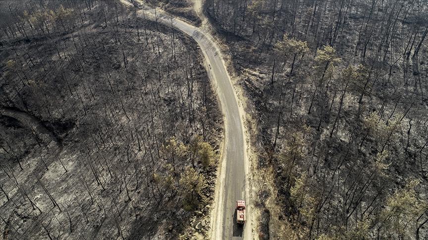 Orman yangınlarından etkilenen alanlar 'Genel Hayata Etkili Afet Bölgesi' ilan edildi
